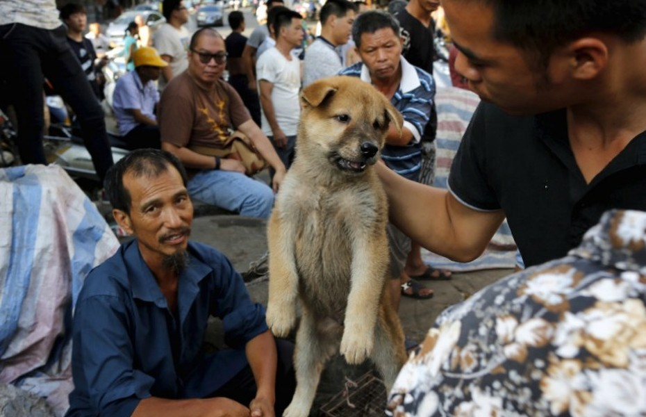 A customer holds a puppy for viewing at Dashichang dog market ahead of a local dog meat festival in Yulin, Guangxi Autonomous Region, June 21, 2015. In the market, some dogs are sold as pets, while others are sold for dog meat. Local residents in Yulin host small gatherings to consume dog meat and lychees in celebration of the summer solstice which marks the coming of the hottest days for the festival, which this year falls on Monday. REUTERS/Kim Kyung-Hoon
